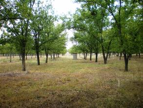 Texas Farm And Ranch For Sale Small Texas Ranches For Sale